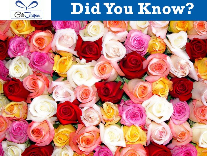 There are over 100 species of the rose.