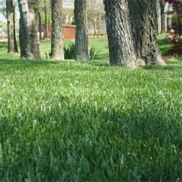 """Grass mix specifically for hot areas (up to 10). Look forward to trying it this year, see if I can get a nice lawn going     """"Combat Extreme™ Southern Zone is a 3-way mixture of turf type fescue and Armadillo Hybrid Kentucky Bluegrass which is heat and drought tolerant enough to be used in USDA Zones 8 - 10"""""""