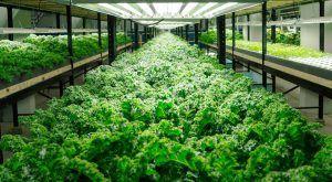 Ecomin - Chuyên gia tư vấn thiết kế trồng rau tại nhà, trồng rau trên sân thượng với các mô hình trồng thủy canh, trồng rau Aquaponics, trồng rau vi sinh hữu cơ ....  http://www.ecomin.com.vn/