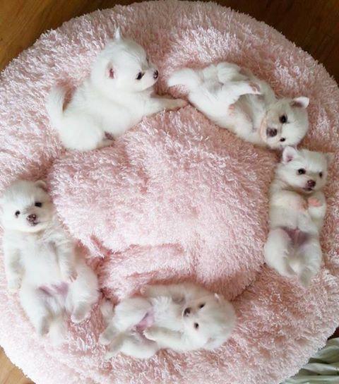 puppy donut
