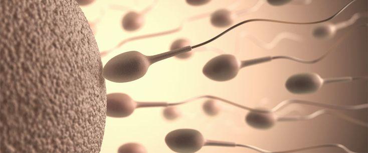 Presentan 3 estudios para mejorar tratamiento de la infertilidad masculina