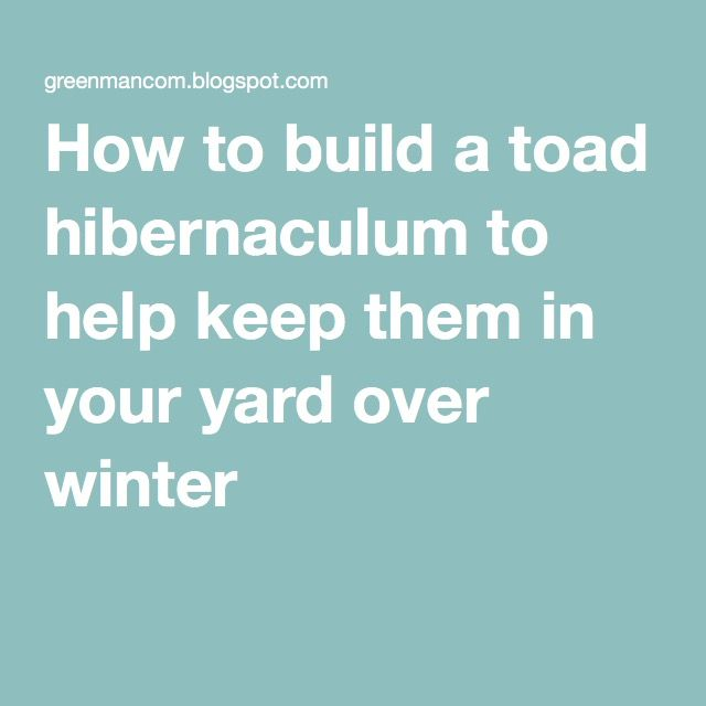 How to build a toad hibernaculum to help keep them in your yard over winter
