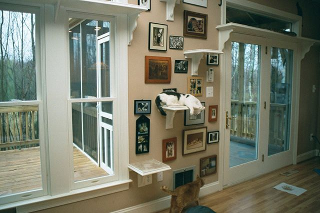 Kacy Turner from Fairfax, Virginia created this spectacular cat climbing wall with step shelves leading to the long shelves below the transom windows overlooking the deck and backyard. This is a gr...