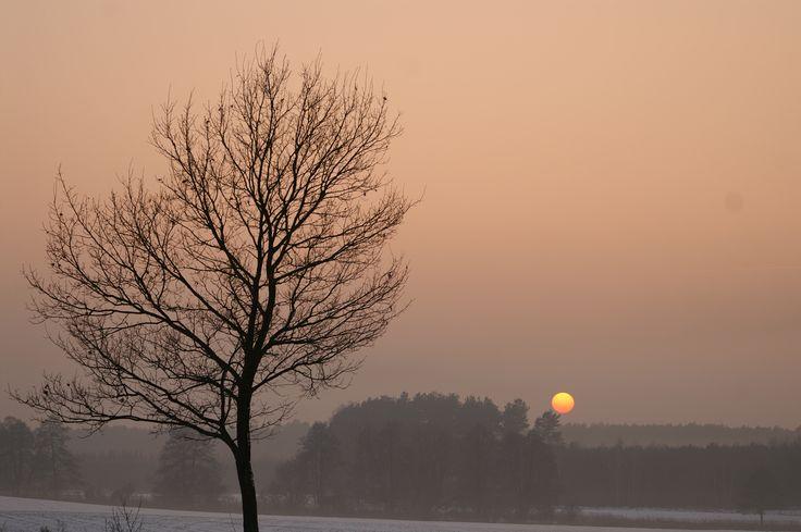 Winter evening, Village, Forest, pink, purple sunset, snow, sun