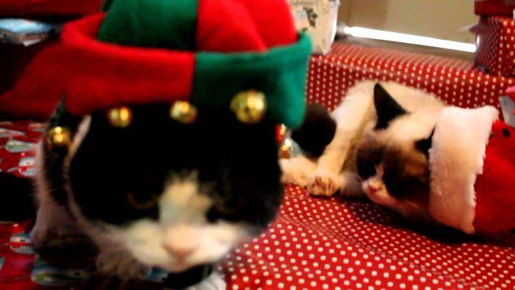 Grumpy Cat and Pokey on Christmas