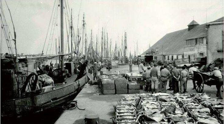 Chaque été, le musée des Thoniers présente une grande exposition. Cette année, elle est consacrée à la pêche hauturière et l'histoire de la Ria.