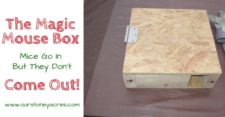 The Magical Mouse Box is a simple solution to help control the mice population around your yard. Build a few of these and your mice will magically disappear