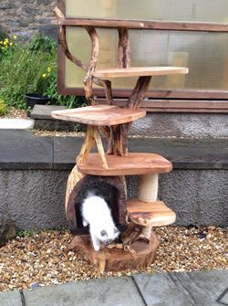 DIY Cat trees easily home made from branches