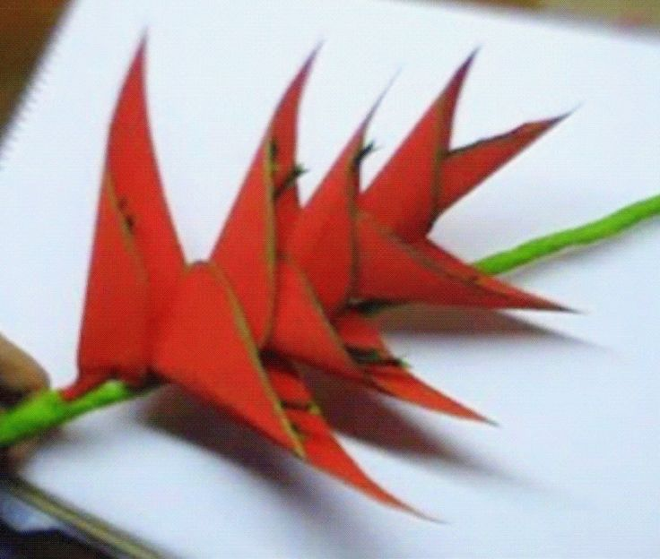Paper Flower Heliconia