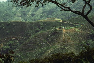 """ritsual:  """" Sam Abell, EXACT LOCATION UNKNOWN, COLOMBIA. Coffee is one of Colombia's main exports.  """""""