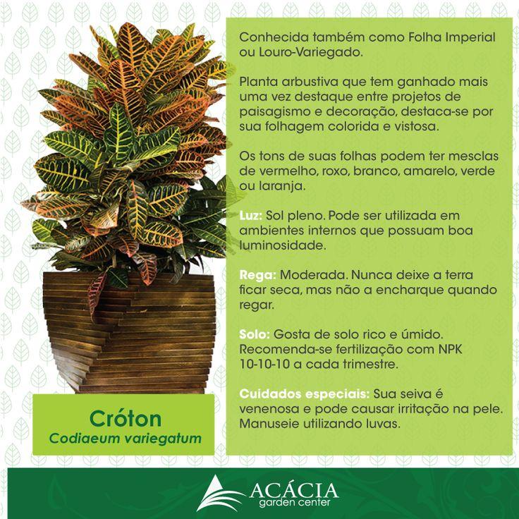 Croton - Como cuidar
