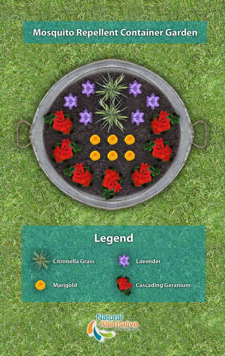 A plan to create your own mosquito repellent container garden using plants such as: citronella grass, lavender, marigolds, and cascading geraniums. Part of January's Lawn and Garden Checklist from Natural Alternative.