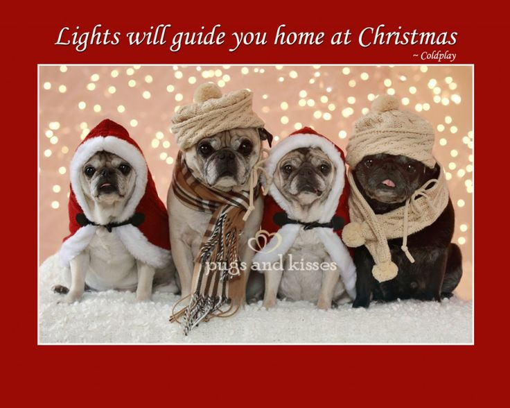 Whole Pug Gang Lights Will Guide You Home at Christmas 2012 by Pugs and Kisses