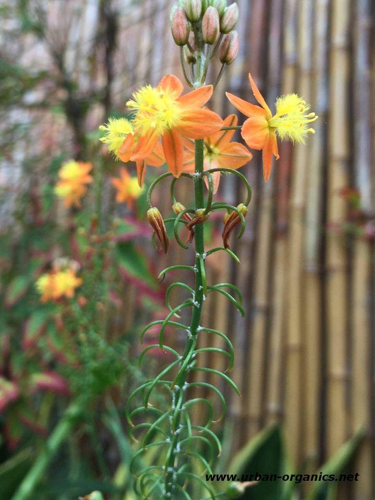 38 best Balcony Gardening images on Pinterest   Balcony gardening ...