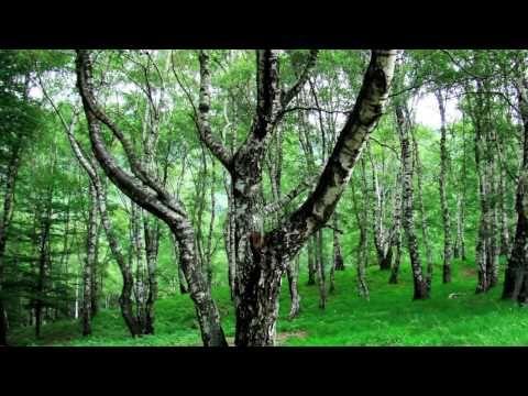 Felix Mendelssohn, Lieder ohne Worte, piano, Op.19 N.1 (HIGH AUDIO and VIDEO QUALITY) - YouTube