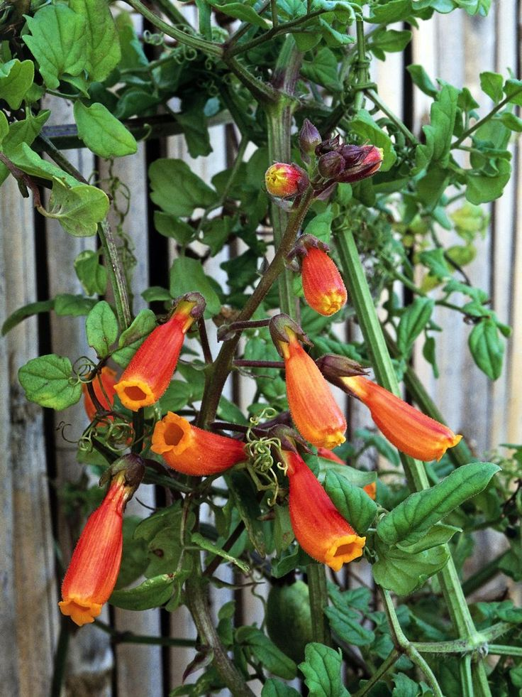Want to appeal to hummingbirds? Consider these flowers they love to visit.