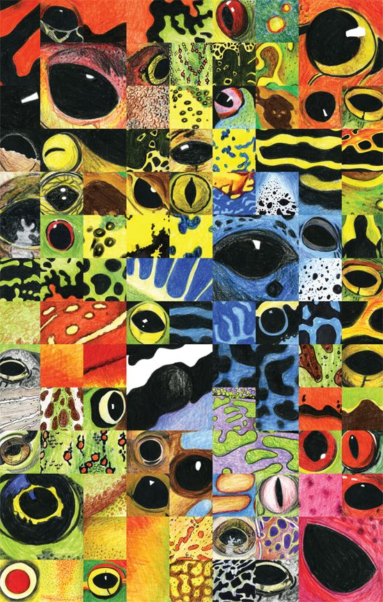 Illustration, Evolution and Frogs  - copyright Ann Dadd