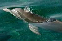Belize: Bottlenose Dolphin Research - Oceanic Society