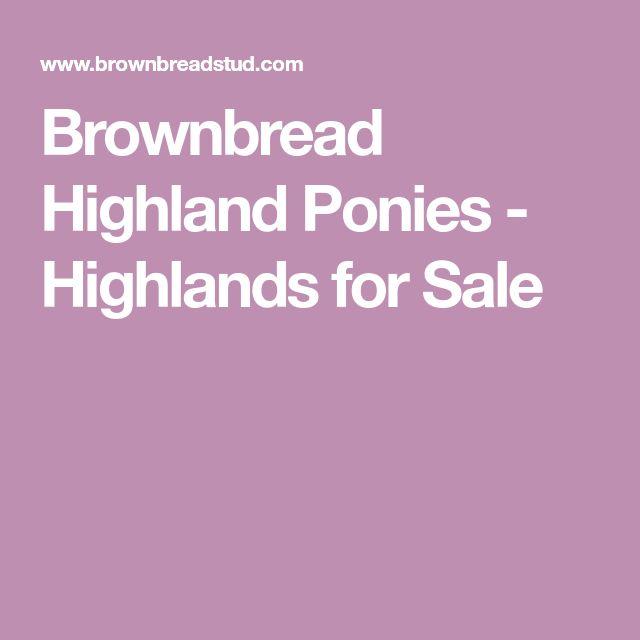Brownbread Highland Ponies - Highlands for Sale