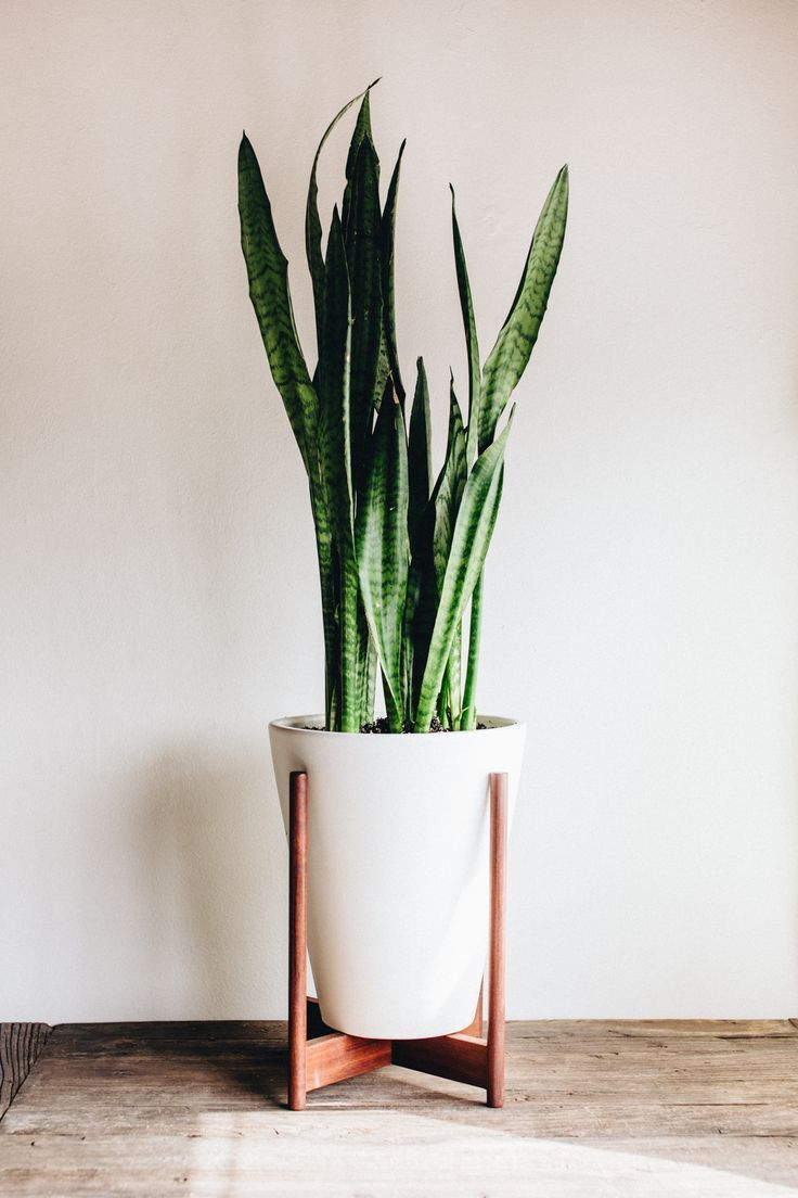 modernica case study funnel planter with wood stand