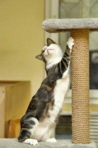 Katze wetzt ihre Krallen am Kratzbaum