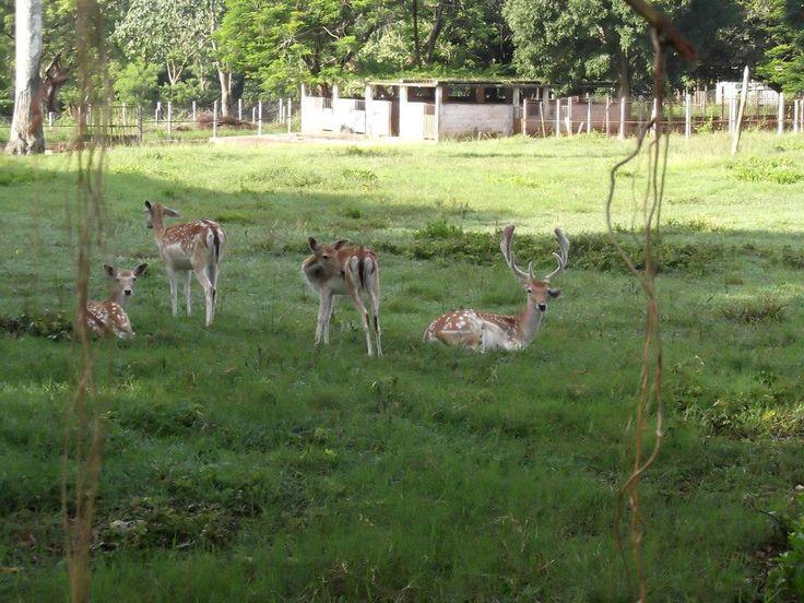 Inaugurado en 1984, el Parque Zoológico Nacional uno de los lugares preferidos por las familias cubanas para pasar los fines de semana.