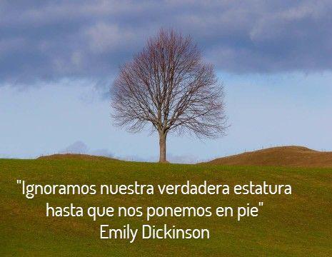 """""""Ignoramos nuestra verdadera estatura hasta que nos ponemos en pie""""  Emily Dickinson #frases #8demarzo"""