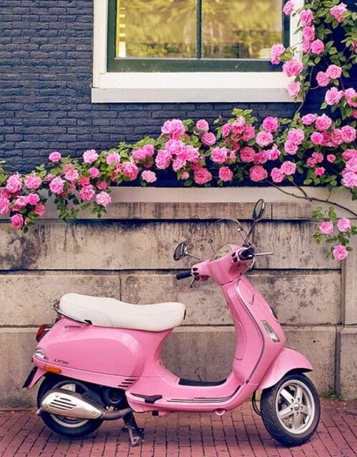 curb appeal - pink roses on dark blue walls and pink motorbike. One day I'll buy a motorbike
