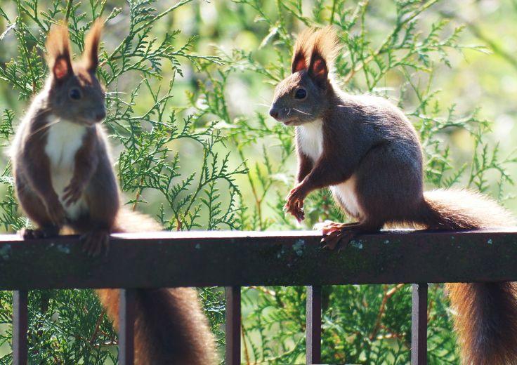 W naszym parku wielu gości mieszka na stałe, np. wiewiórki :)