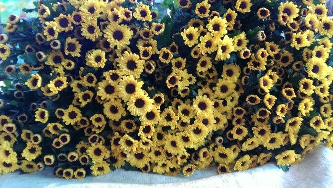 Sprays Sunflower