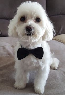 He's ready for his black tie doggie dinner! Cutest pictures of dogs and puppies! We love all breeds of doggies. What's your pets name? #DogLovers