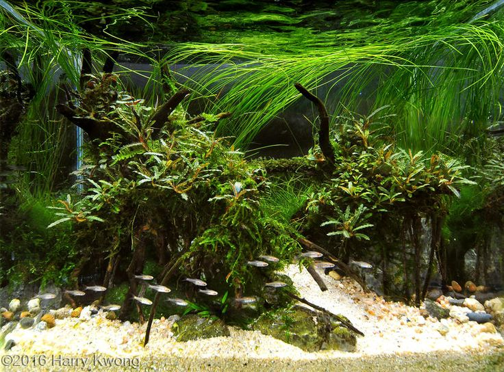 1000+ images about Nano Aquascaping on Pinterest Cubes, Rainy season ...