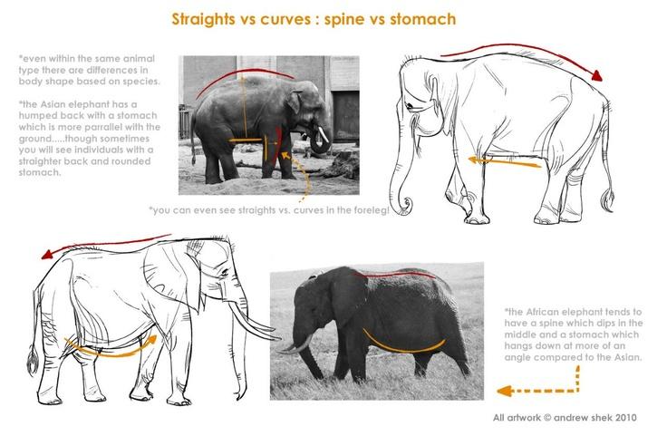 how to draw elephant