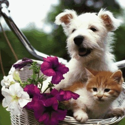 kitty and puppy on bike