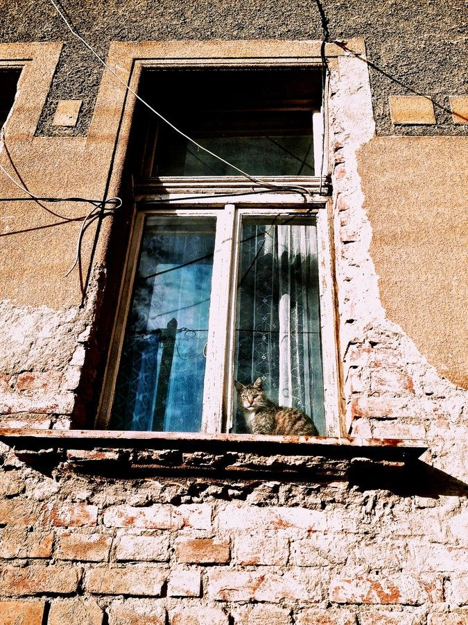 Cat behind window by Roman Rogner on 500px
