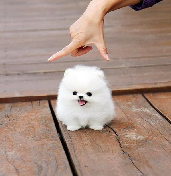 Yes, this little guy exists Land of cuteness @landpsychology