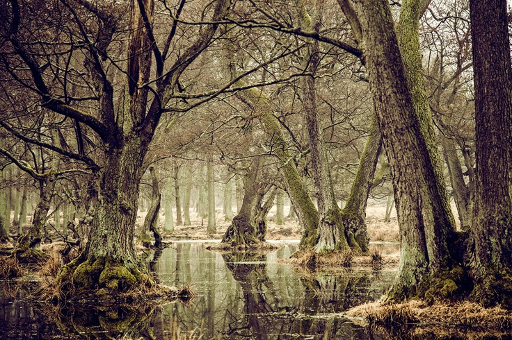 "We just added 20 new pictures to our New Nordic collection. This one is called ""Misty Swamp"" =)"