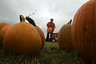 Pumpkin chunkin in Albion is fundraiser for Albion College equestrian club