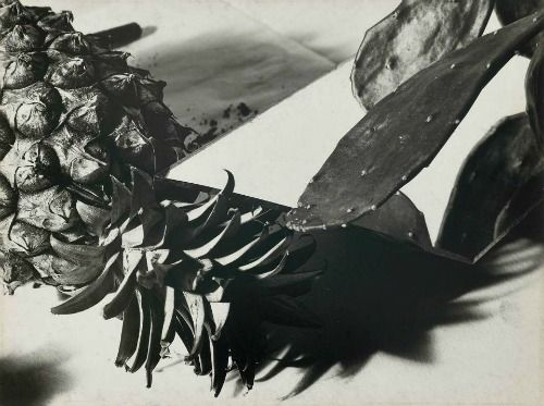 Florence Henri, Still Life with Pineapple and Cactus, 1931Cactus 1931, B W Photographers, White Photography, Cacti, Still Life, Art Direction, 1931 Florence, Photographers Art, Florence Henry