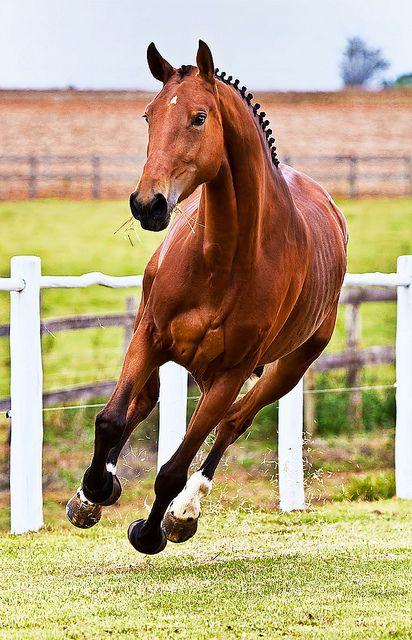 International WorkShop 004 by © Raphael Macek - Horse Photography, via Flickr.com