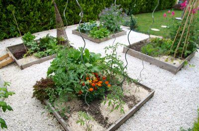 Vous débutez en jardinage ? Voici un guide du potager pour les nuls, ces articles sont accès sur le potager en carrés qui est très adapté pour les débutants