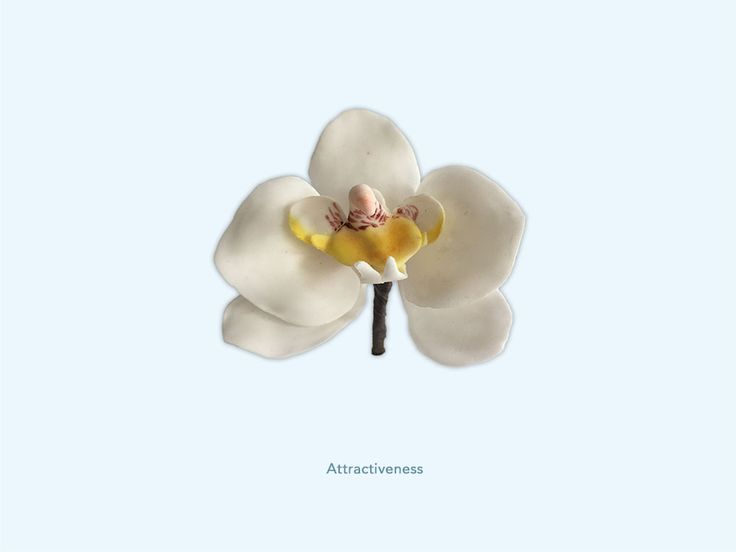 Attractiveness - Orchidee