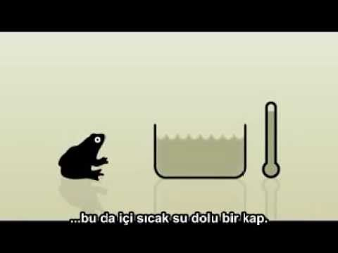 Kurbağa Toplumu #kritikveanalitikdüşün