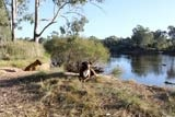 Blog about travelling around Australia with dogs