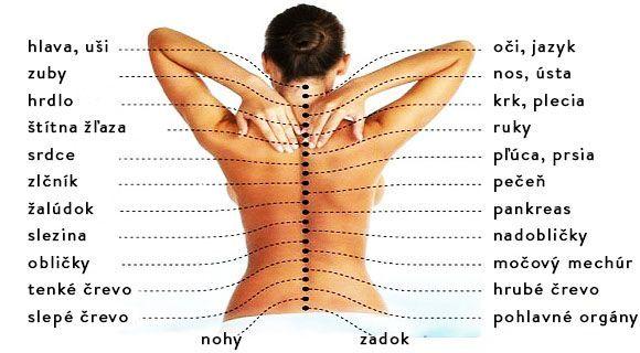 Odhaľte pravú príčinu bolesti chrbtice alebo ako je chrbtica prepojená s jednotlivými orgánmi | Chillin.sk