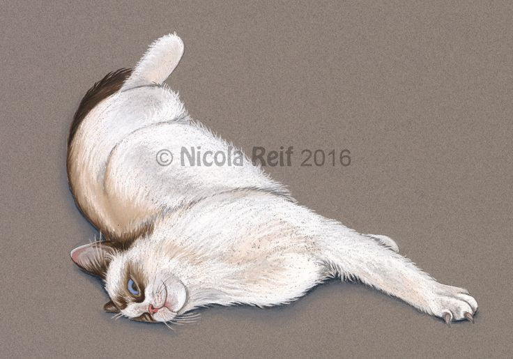 Iggle Piggle the Ragdoll Cat (Photo reference artists own). Pastel Pencil & Pastel on Canson Mi Teints Paper.