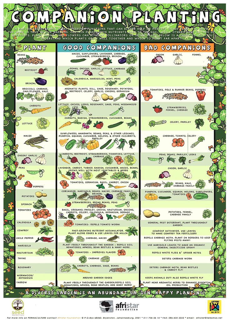 Chart Green In Real Life Ideas For The Home Garden Companion