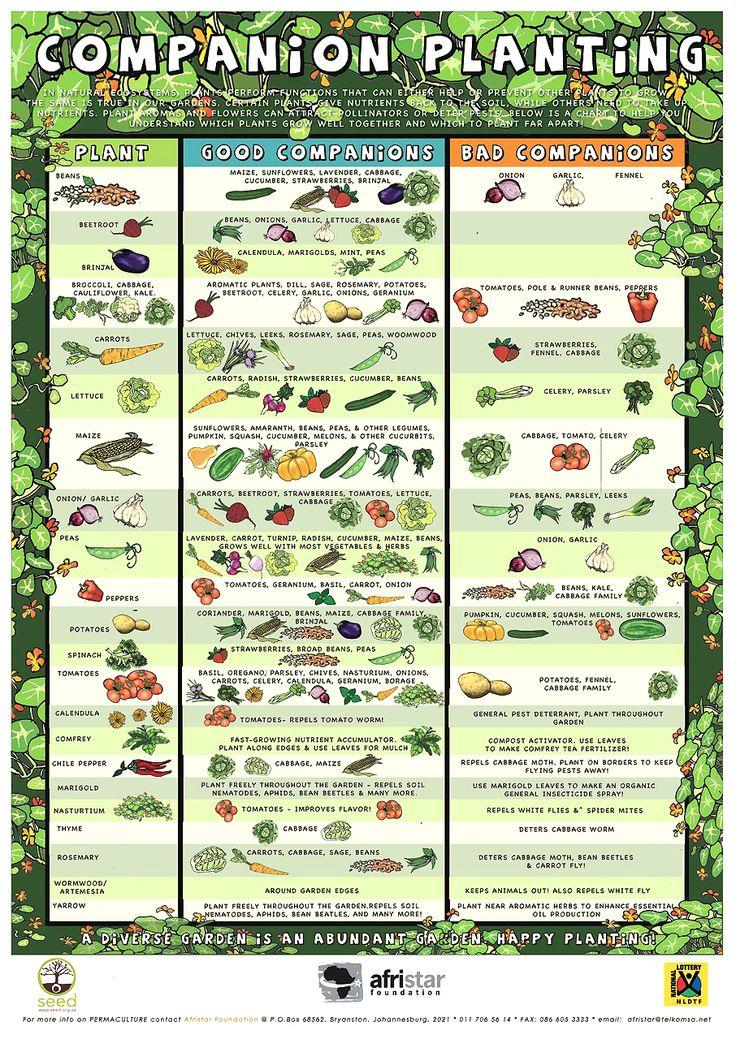 Companion Planting Guide Infograhic For Organic 640 x 480