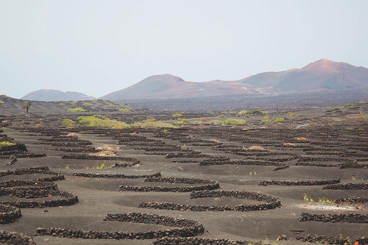 Traveling in Lanzarote - La Geria wineyards