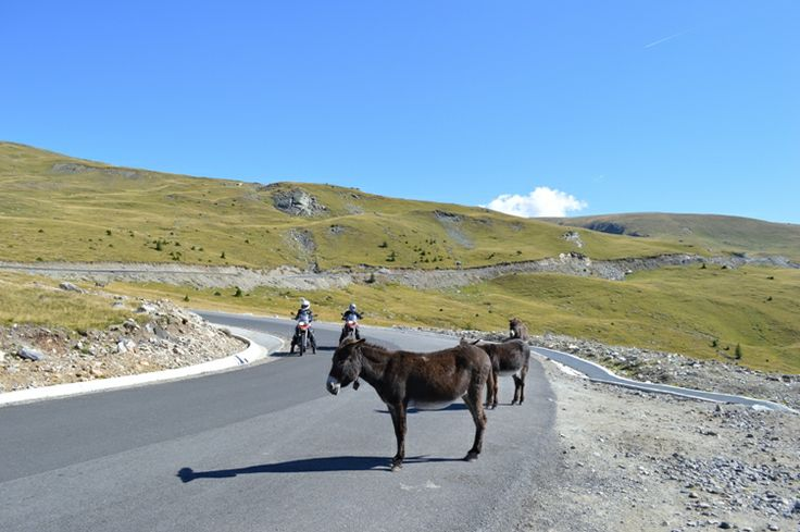 funny creatures on the middle of the road  www.motorcycle-tours.travel